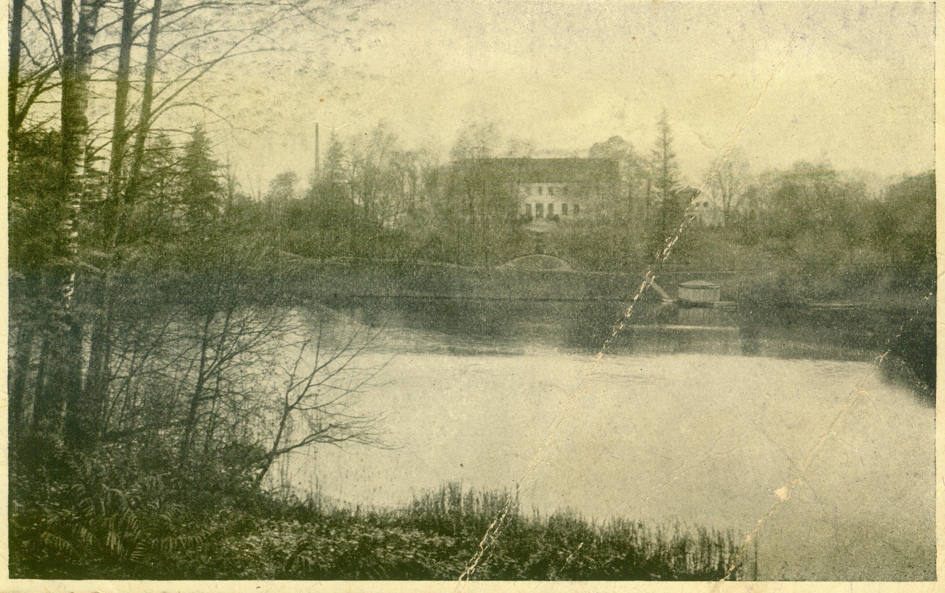 Sosny-widok od strony jeziora