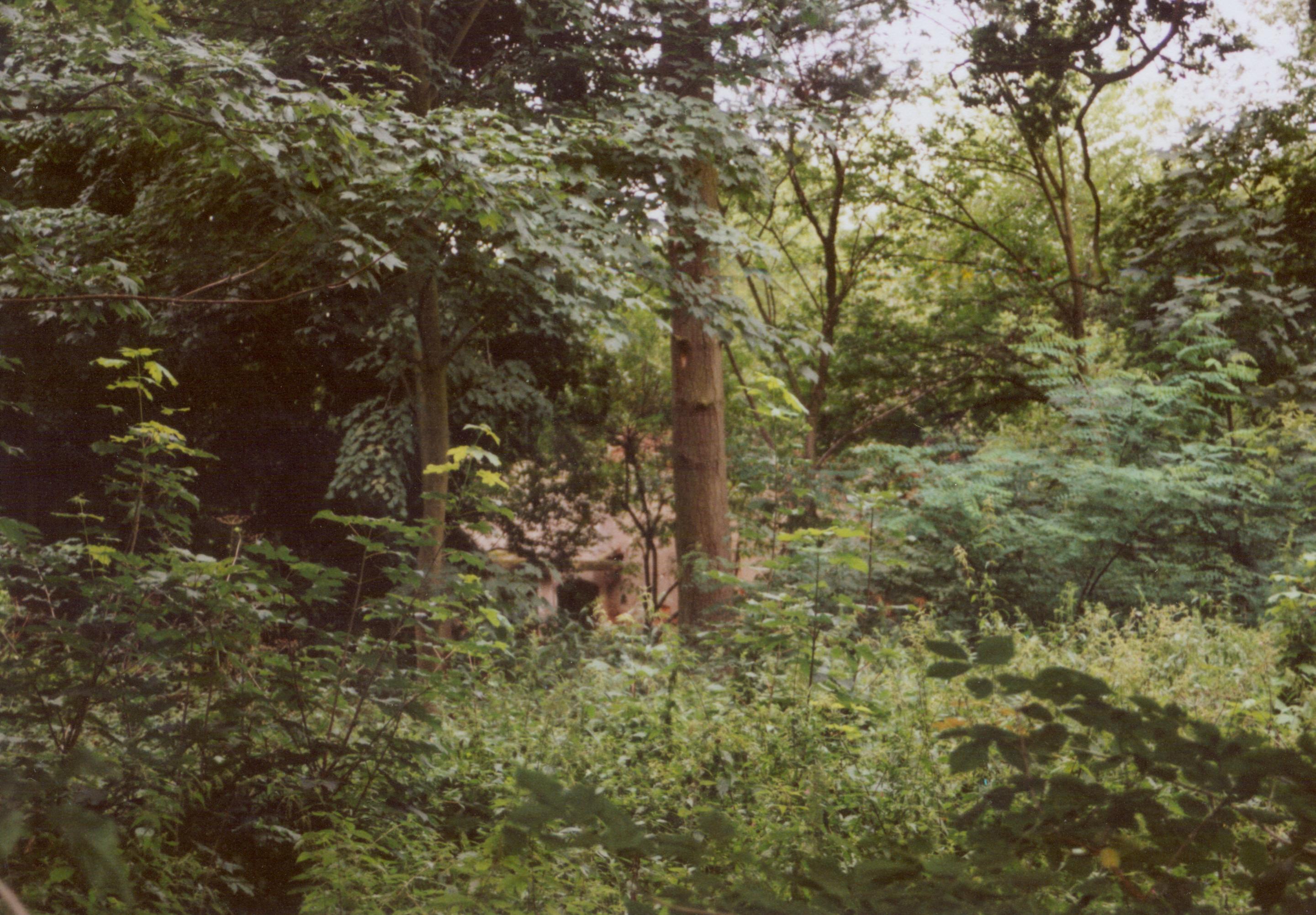 Samlino sierpień 2008- zaniedbały park z ruiną dworu