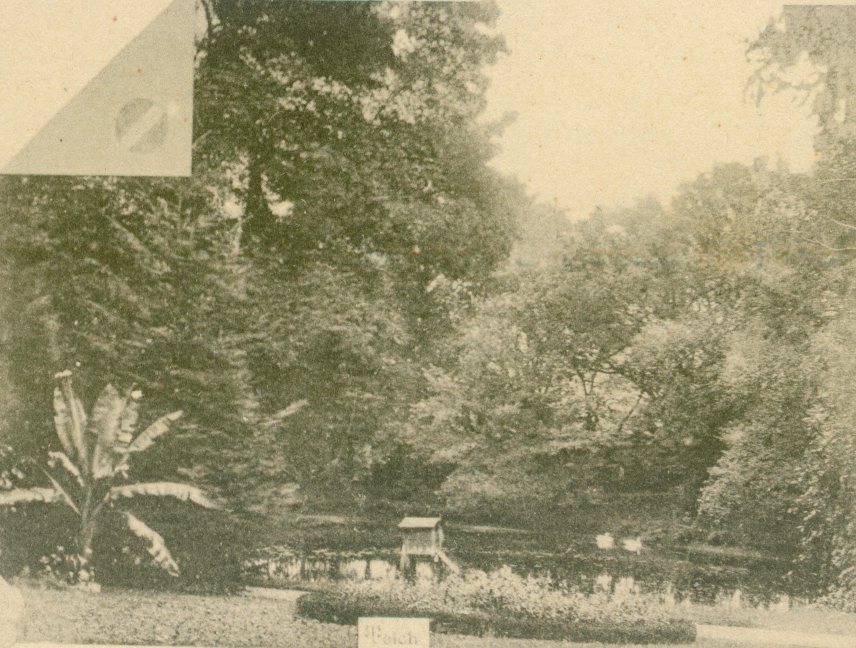 Białęgi-staw w parku