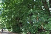 Droga dojazdowa do folwarku