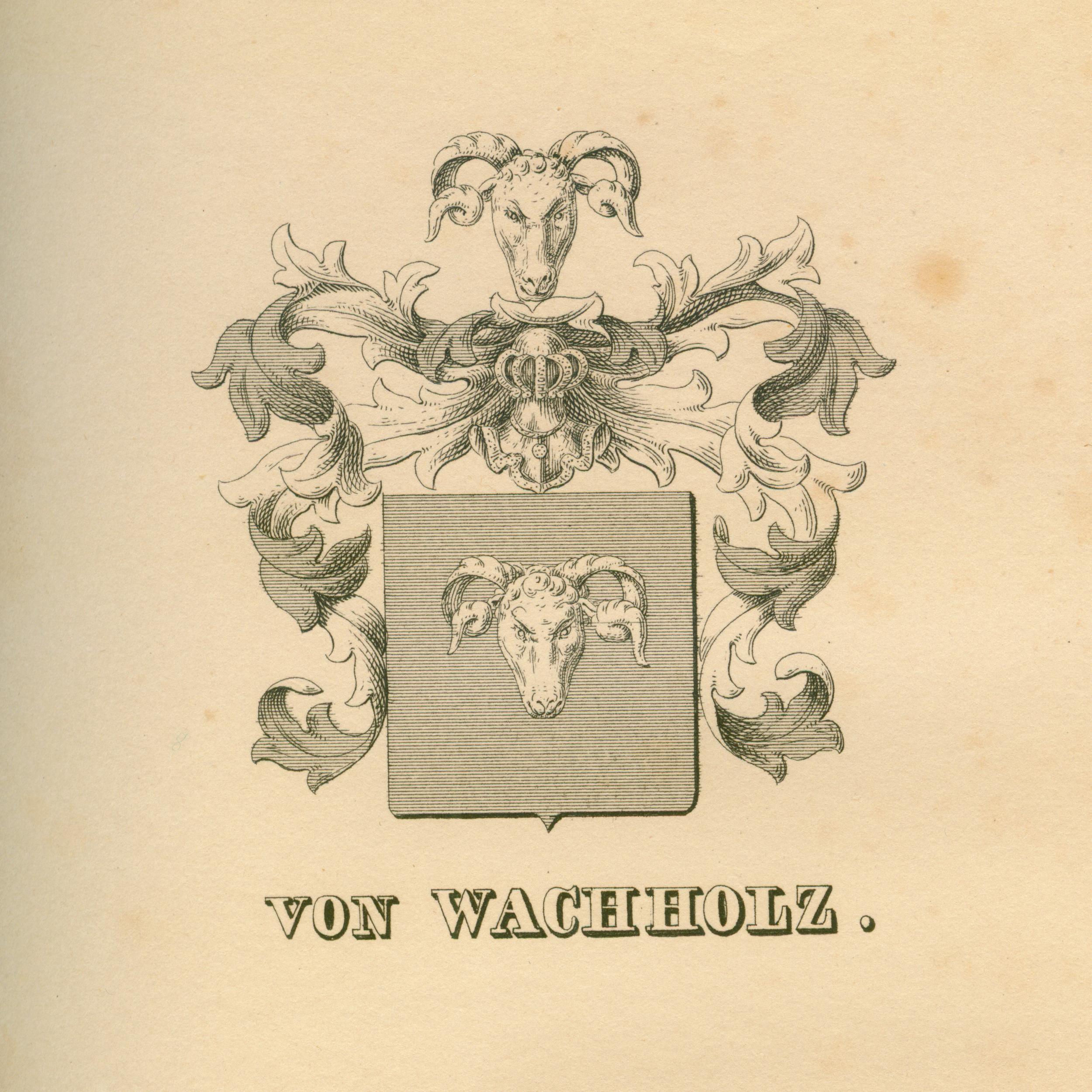 Wachholtz